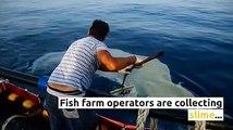 Sea slime: annoying for #bathers but lucrative for #fishfarm operators.Read more on  Photos by  igliborg#mediterranean #mediterraneansea #farmedfish #tuna #t