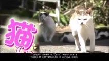 NHK-World - Cool Japan  NHK ワールド - クールジャパン      -    Cats