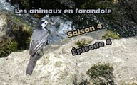 Les animaux en farandole saison 4 épisode 4