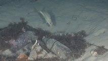 El plástico de los océanos: la amenaza llega ya a nuestra mesa