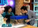 iBilib: How to make bubbles levitate