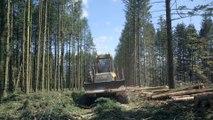 Le Temps des forêts. Bande-annonce