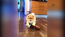 Dogs and Cats doing funny things - PETS PRODUCTIONS - Wow 4