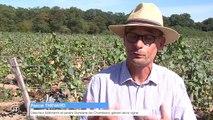 Premières vendanges du vin de Chambord - 12/09/2018