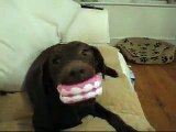 Dog Loves Fake Teeth