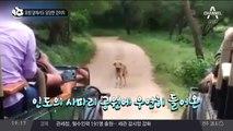 표범 앞에서도 당당한 강아지