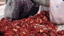 Mevsimlik Tarım İşçilerinin Zorlu Mesaisi