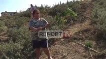 Konispol, policia iu shkul mandarinat, fermerja në lot: S'kemi mbjellur drogë as s kemi vjedhur