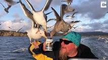 Un marin partage sa tasse de thé avec les mouettes