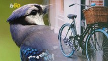 Google Holds Competition to Help Its Algorithm Tell Bikes from Birds