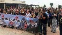 Vídeo crónica: Concentración y acto en Gijón contra las matanzas de LOBOS en Asturias