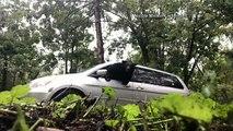 Egy házaspár véletlenül bezárt egy medvét a kocsijába