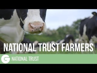 A cheesy family and their cows | National Trust