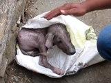 Ils sauvent un chien abandonné dans la rue et lui changent sa vie !