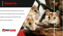 Pest Secure Toronto: Reliable Toronto Rat Removal Services