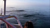 Three whales jump out of the water / Trois baleines sautent hors de l'eau