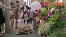 Un papy et son animal de compagnie insolite : une énorme tortue