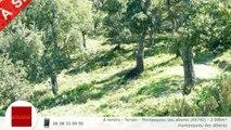 A vendre - Terrain - Montesquieu des alberes (66740) - 2 000m²