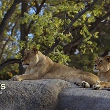 สารคดี ครอบครัวสิงโต