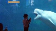 Al Jazeera probe unveils rampant animal abuse in China