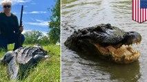 Texas county mayor shoots gator, seeks revenge for mini-horse