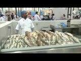 #أخبار_الدار : سوق الجبيل بالشارقة يشارك في حملة منع صيد وتسويق أسماك الشعري والصافي العربي