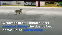 Benny the Skating Dog could be the next Golden Knights on-ice entertainment