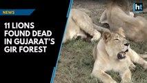 11 lions found dead in Gujarat's Gir forest