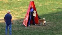 belgian malinois dog,Proficiat Nicole,ipo 2018,owner = Eric Rutten