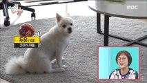 [HOT] Cute puppy,전지적 참견 시점 20180922