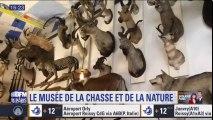 Partez à la découverte du musée de la chasse et de la nature