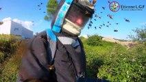 Incroyable attaque de frelons asiatique (Landes)