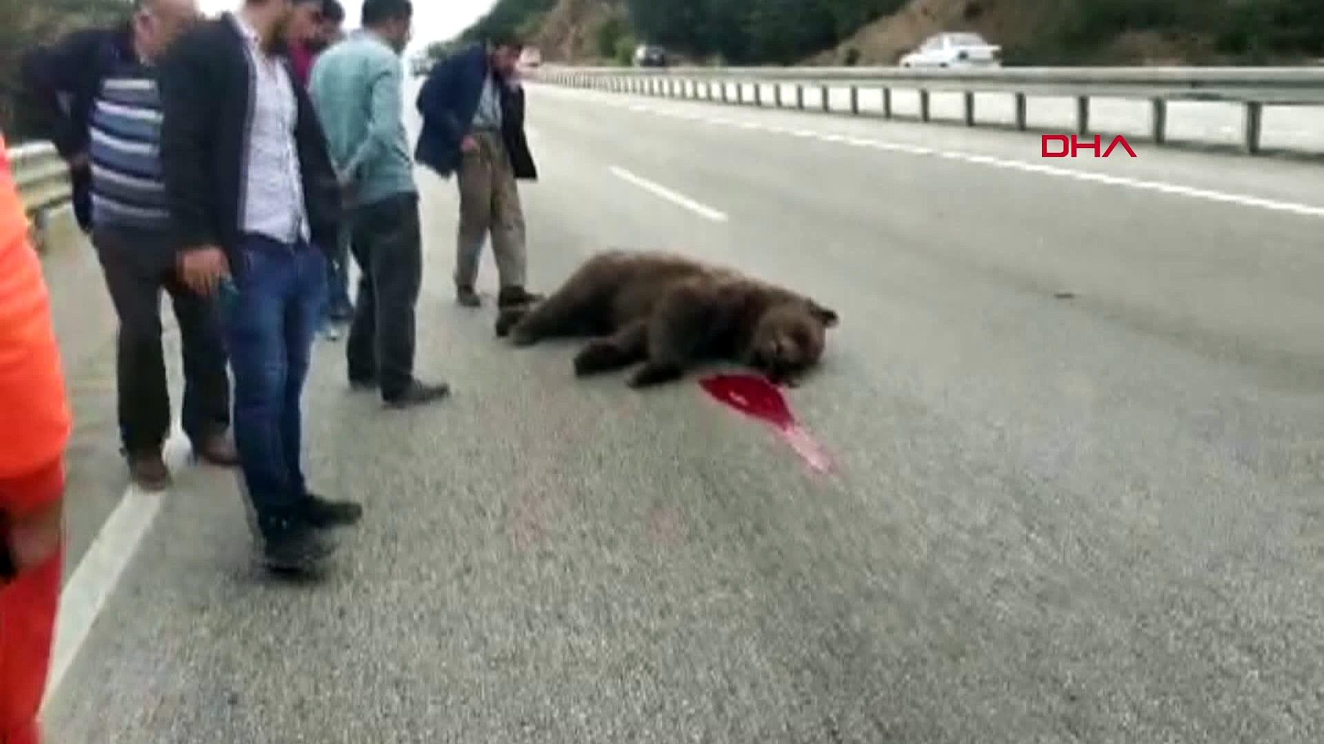 Kastamonu'da kaza sonucu ölen ayıya tekme atıldı ve beddua edildi!