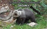 Les animaux en farandole: saison 4: épisode 6
