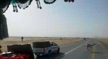 camels on road in saudi arabia