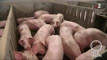 Sans frontière- La peste porcine africaine est en Belgique