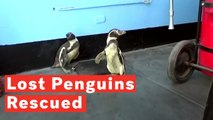 26804161482b Penguins Pringle and Charlie Get Cuddly With 92-Year-Old Animal ...