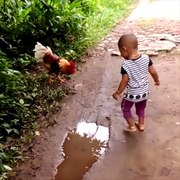 Why did the chicken cross the road To attack every