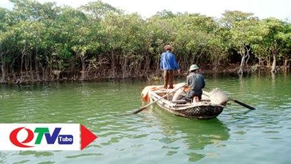Trải nghiệm tuyệt vời rừng ngập mặn Đồng Rui - QTV