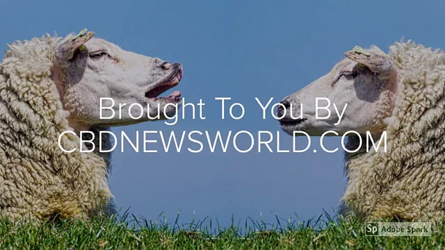 Buy Hemp CBD Oil For Pets
