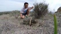 Un serpent à sonnettes mord sa GoPro... Impressionnant
