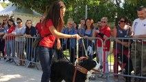 L'Isle-sur-la-Sorgue : journées portes ouvertes de la fondation Frédéric Gaillanne pour les chiens guides d'aveugles
