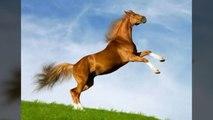 Cheval qui hennit-horse sound - صوت الحصان