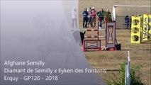 Afghane Semilly (Diamant de Semilly x Eyken des Fontenis) - Erquy 2018 GP120 - (8ème)