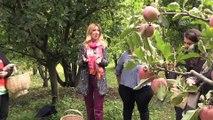 Tropicana 'Bahçe Okulları' projesiyle Türk çiftçisini destekliyor - AMASYA