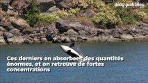 Les résidus de nos produits chimiques risquent de tuer plus de la moitié des orques d'ici 2070