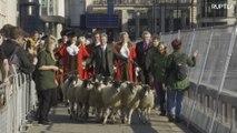 Freemen lead flock of sheep across London Bridge in Middle Age tradition