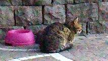 mondo animale EP 24