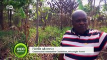 Reforesting Nigeria before it's too late   DW English