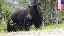 Bear shot during hunting trip falls, badly injuring soldier who shot it